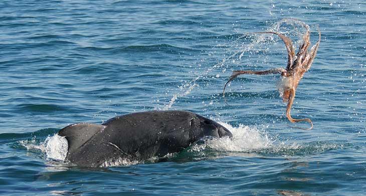 Como Preparar Polvo Para Refei 231 227 O Pergunte Aos Golfinhos