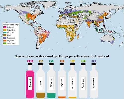 óleo de coco e meio ambiente
